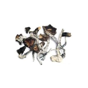 Dried Magic Mushrooms