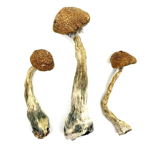 Wavy Z's Dried Magic Mushrooms Online Canada