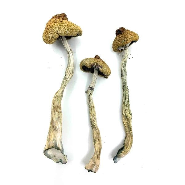 Arenal Volcano Dried Magic Mushrooms Online Canada