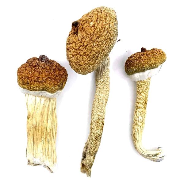 Blue Meanies Dried Magic Mushrooms Online Canada