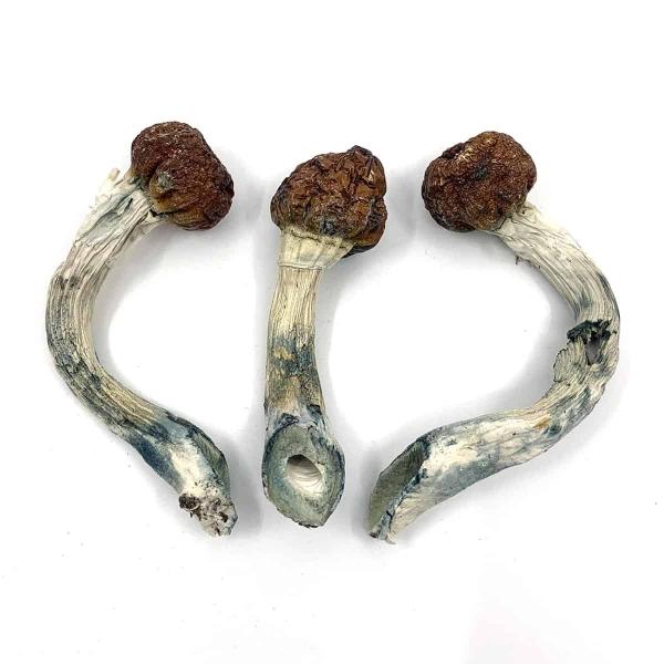 Penis Envy Dried Magic Mushrooms Online Canada