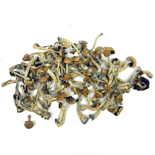 Texas Penis Envy Buy Dried Magic Mushrooms Canada