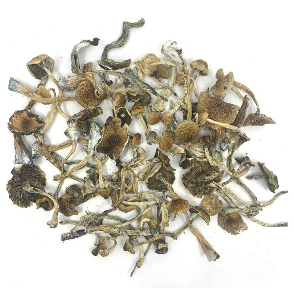 African Transkei Dried Magic Mushrooms Canada