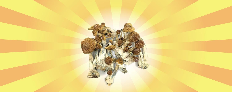 best canada shrooms online