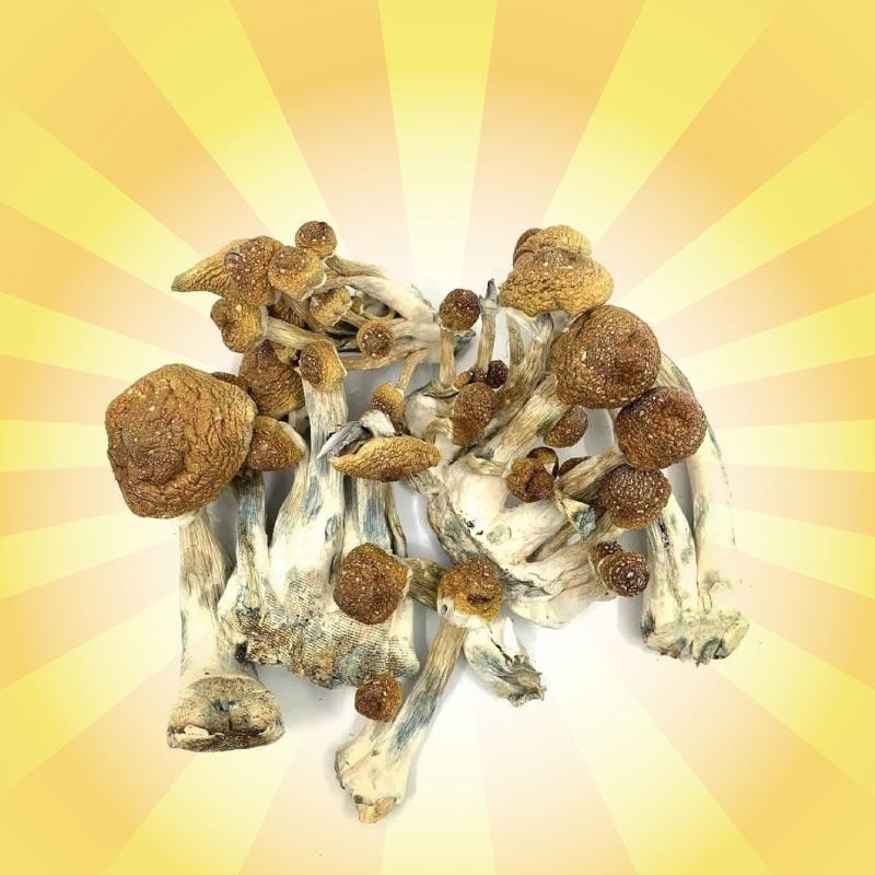 best shrooms canada