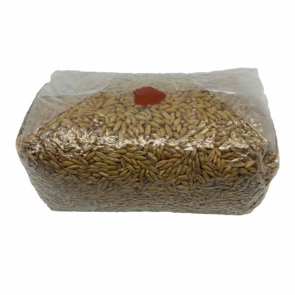 Mushroom grow kit online canada